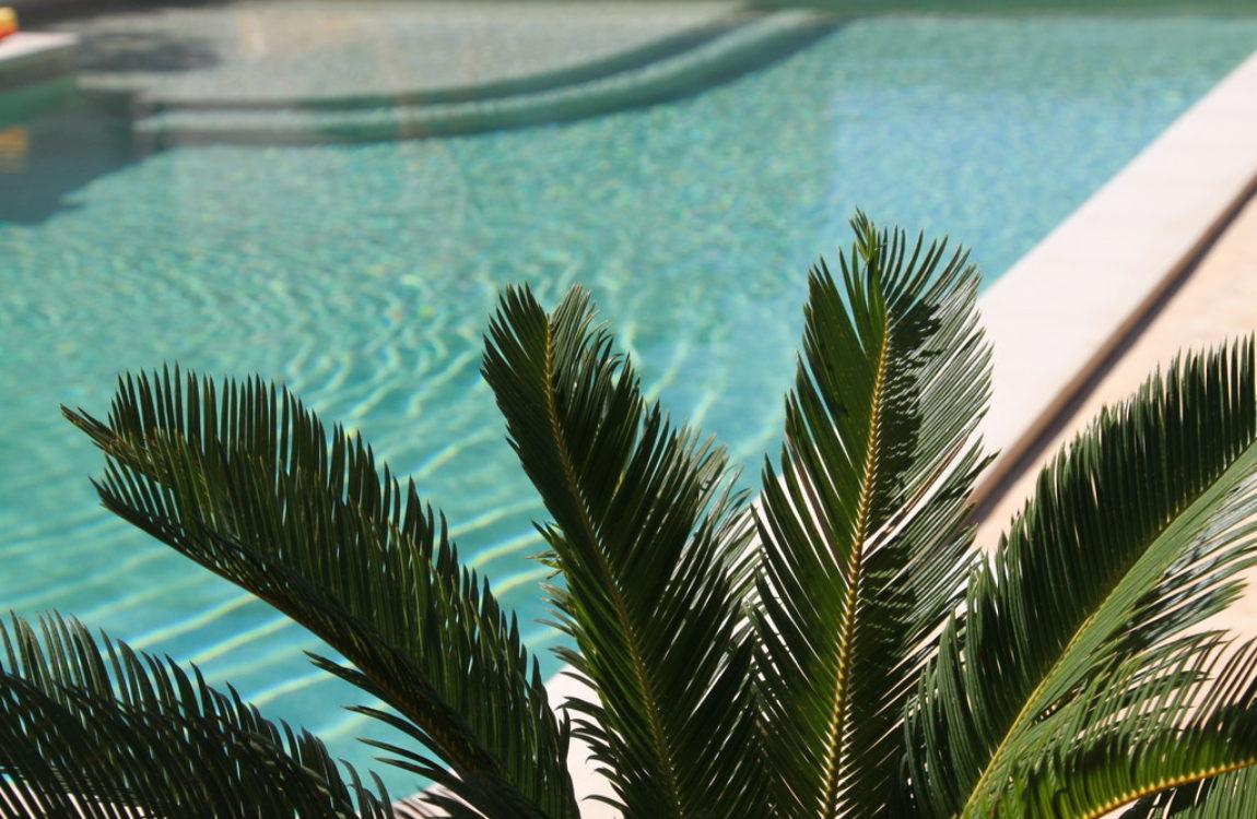 piscine avec palmier